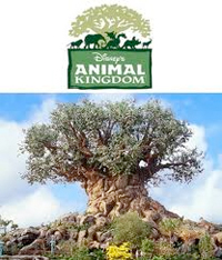 animalkingdom